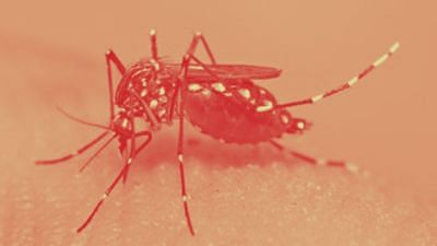 Cat Que Virus: Amid fight against COVID-19, ICMR warns about another virus from China