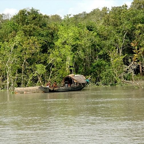 This is how illegal Bangladeshi immigrants are settling down in Sundarbans