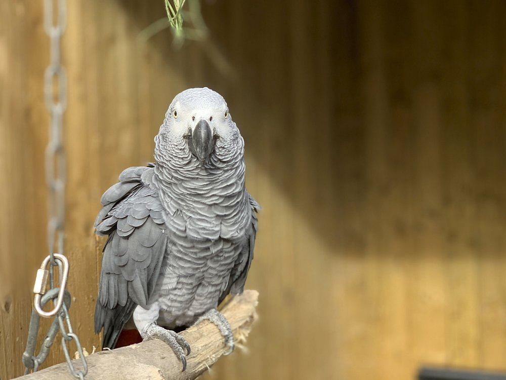 Zoo separates parrots for swearing at visitors