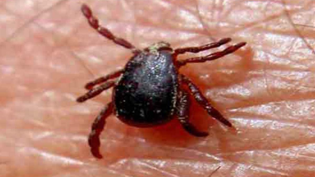 Maharashtra: Palghar district on alert over Congo fever
