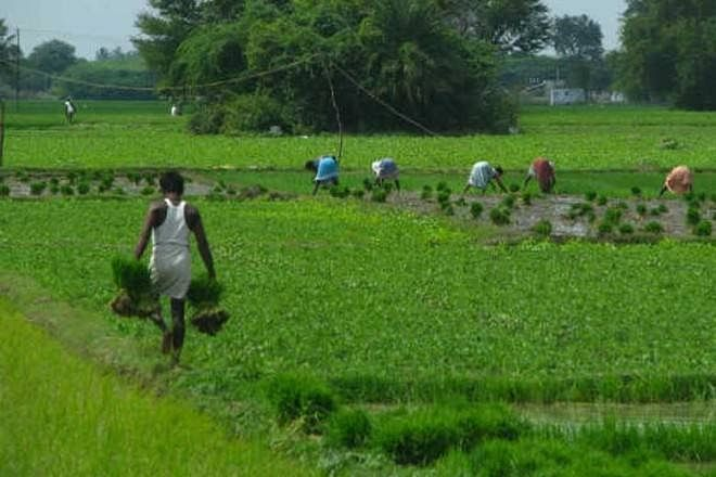 Seeds of doubt: Centre must allay farmers' concern over reforms