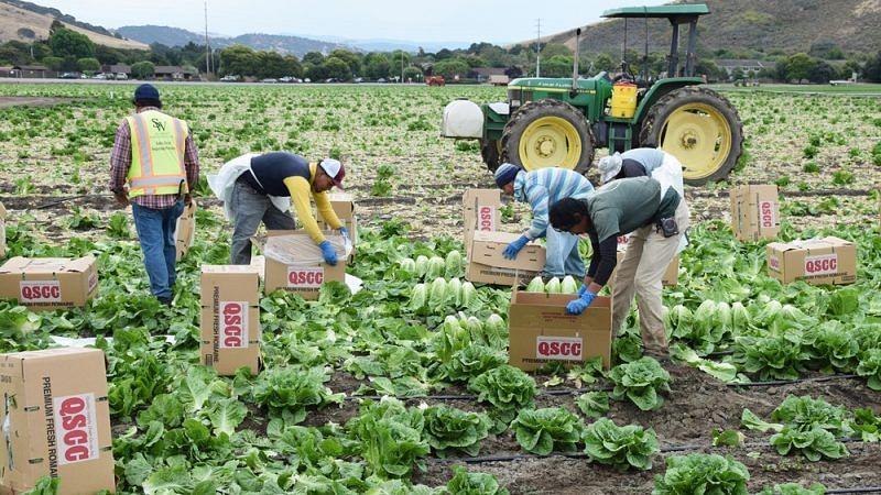 Govt sanctioned Rs 647 lakh for farmers' welfare scheme, HC told