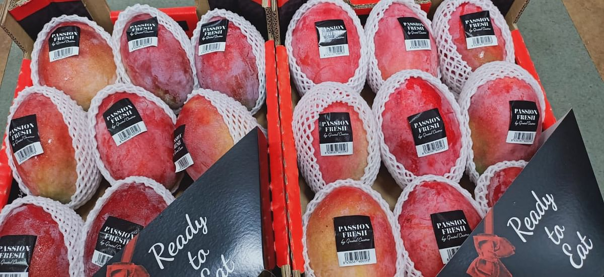 No buyers for the king of fruits from  Brazil and Spain due to high price