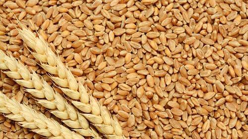 Grain/ Representational Image