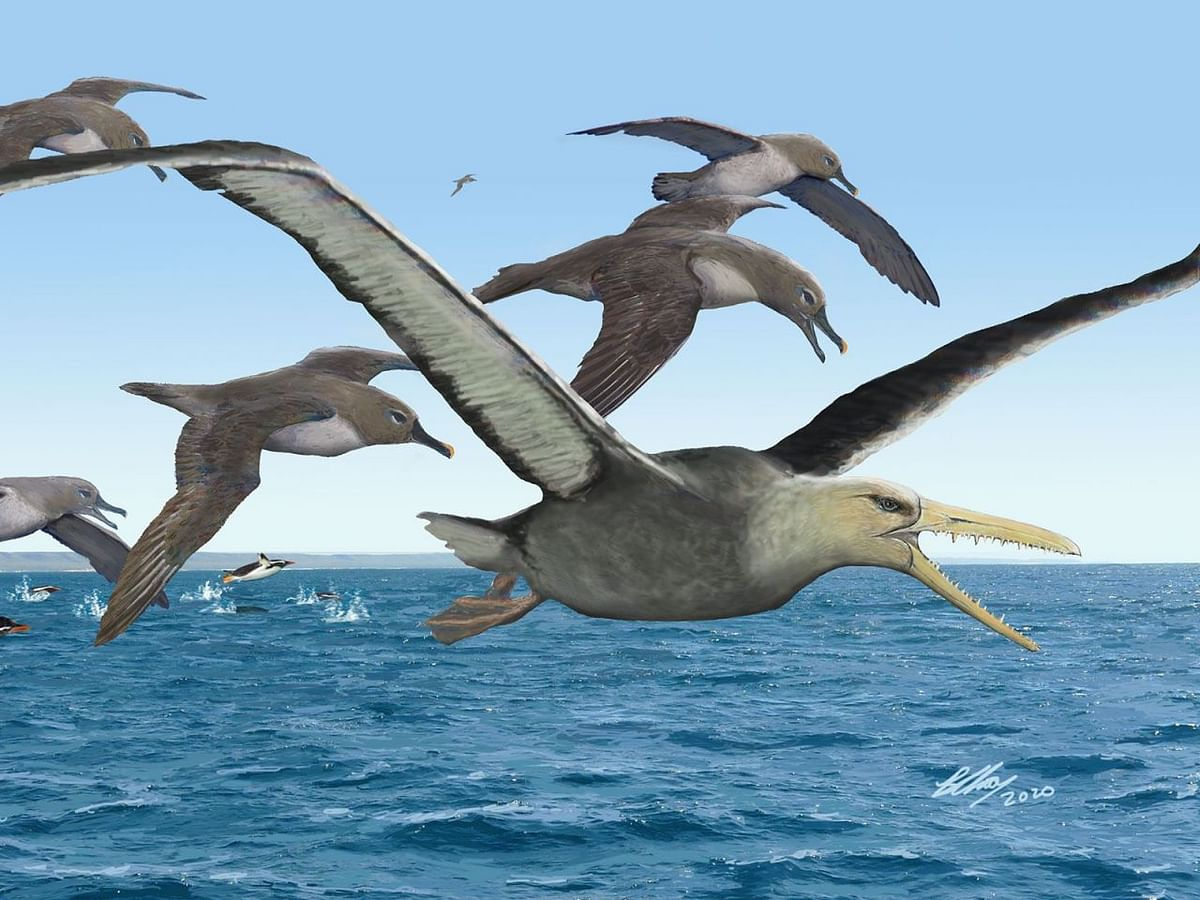 Fossil of 50-million-year-old giant bird with 21-foot wingspan identified