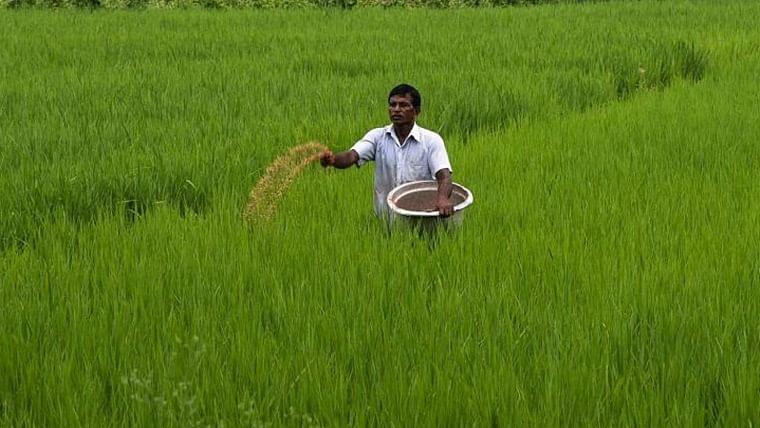 Retreating monsoon rains worry paddy farmers in Maharashtra