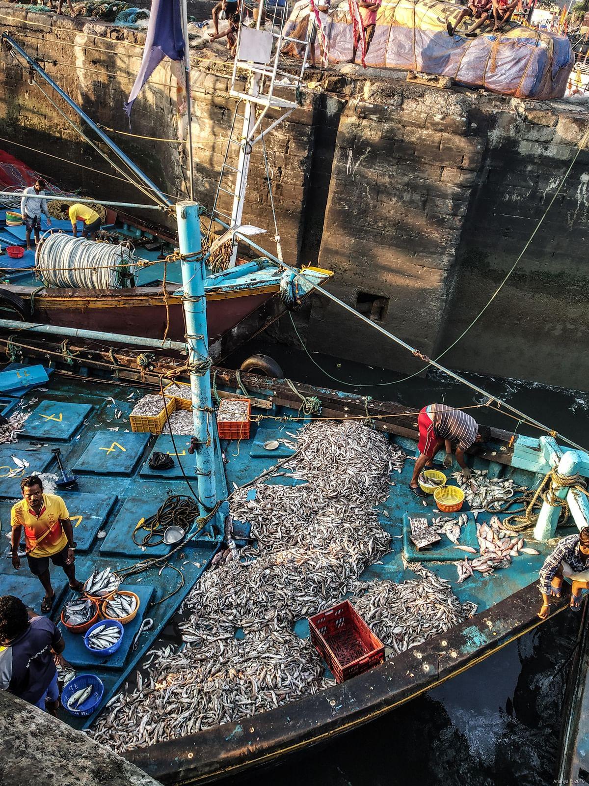 Mumbai's fishermen are turning 'Aapada' into 'Aavsar'