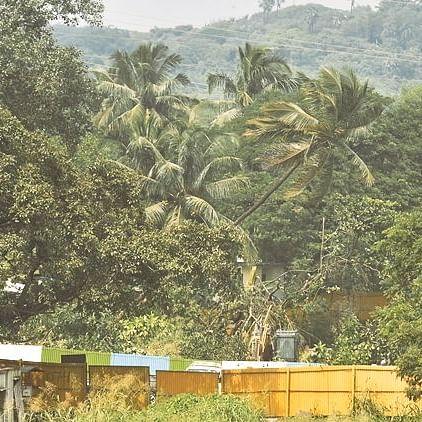 Opinion: Aarey - Mumbai's treasure trove writes MLA Sunil Prabhu