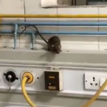 Video of rats running amok at ICU in Tamil Nadu govt hospital goes viral