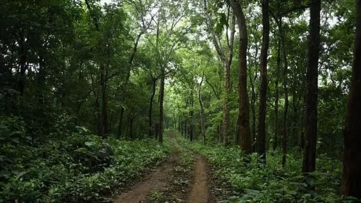 Chhattisgarh: 'Narva Development Plan' aims to revive depleting groundwater resources in forests