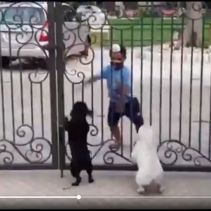 Watch: Lil pups enjoying a kid's Bhangra moves is the cutest video on internet today!