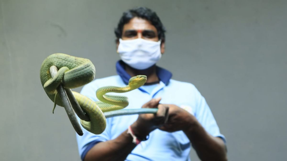 Wildlife Week: Inmates from Indore Snake-House go online- Check  interesting facts