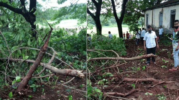 AAP 'strongly objects' tree cutting at Aarey, says 'plain foolish to destroy a forest to build a zoo'
