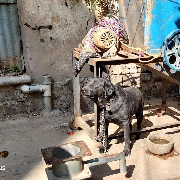Indore: Dog owner booked for keeping dogs hungry, under hot sun