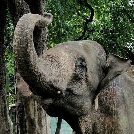 Tamil Nadu: CBI launches investigation in deaths of elephants, poaching in forests