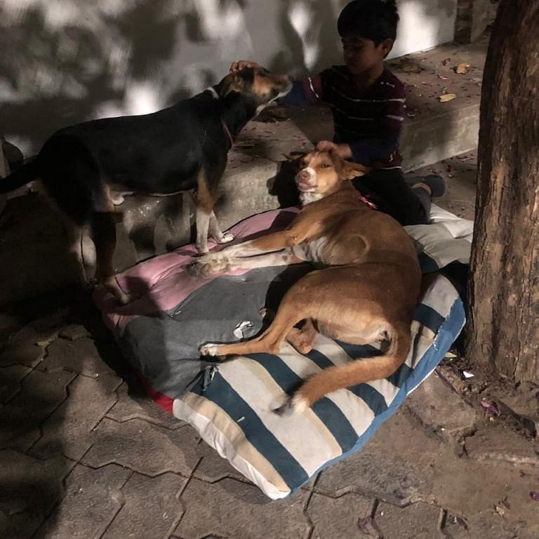 Bhopal: Women make cozy beds for stray dogs as winter rolls in