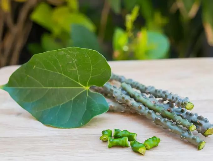 The goodness of ayurvedic herb, Giloy