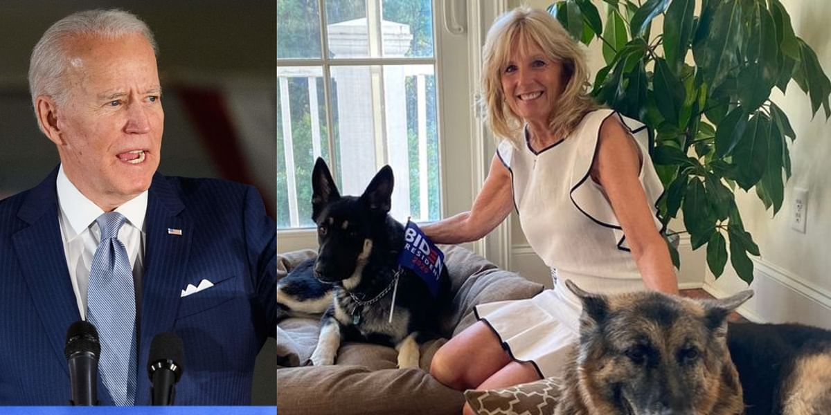 First dogs of America: POTUS-elect Joe Biden to bring 'DOTUS - Dogs of the United States' to White House