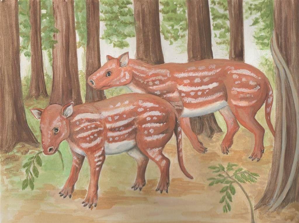 Horses, rhinos evolved from strange hoofed animal in India: Study