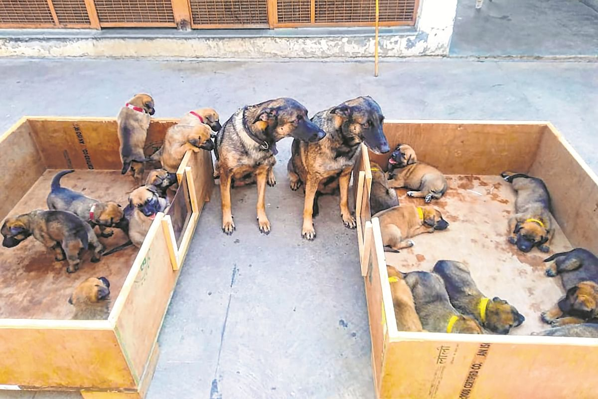 ITBP gets 17 'Osama Hunter' pups in canine squad