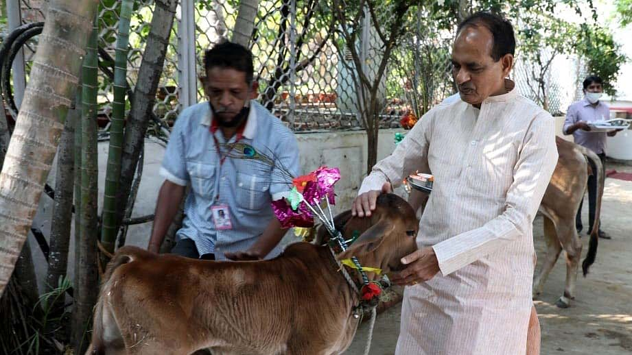 MP Government plans to impose cess for cow protection