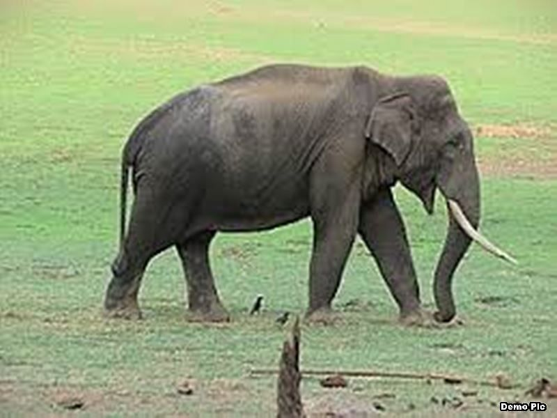Madhya Pradesh: Elephant attacks tribals to avenge death of behemoth