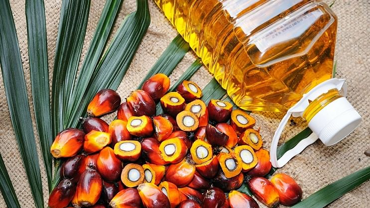 India's June palm oil imports down 24% from previous month