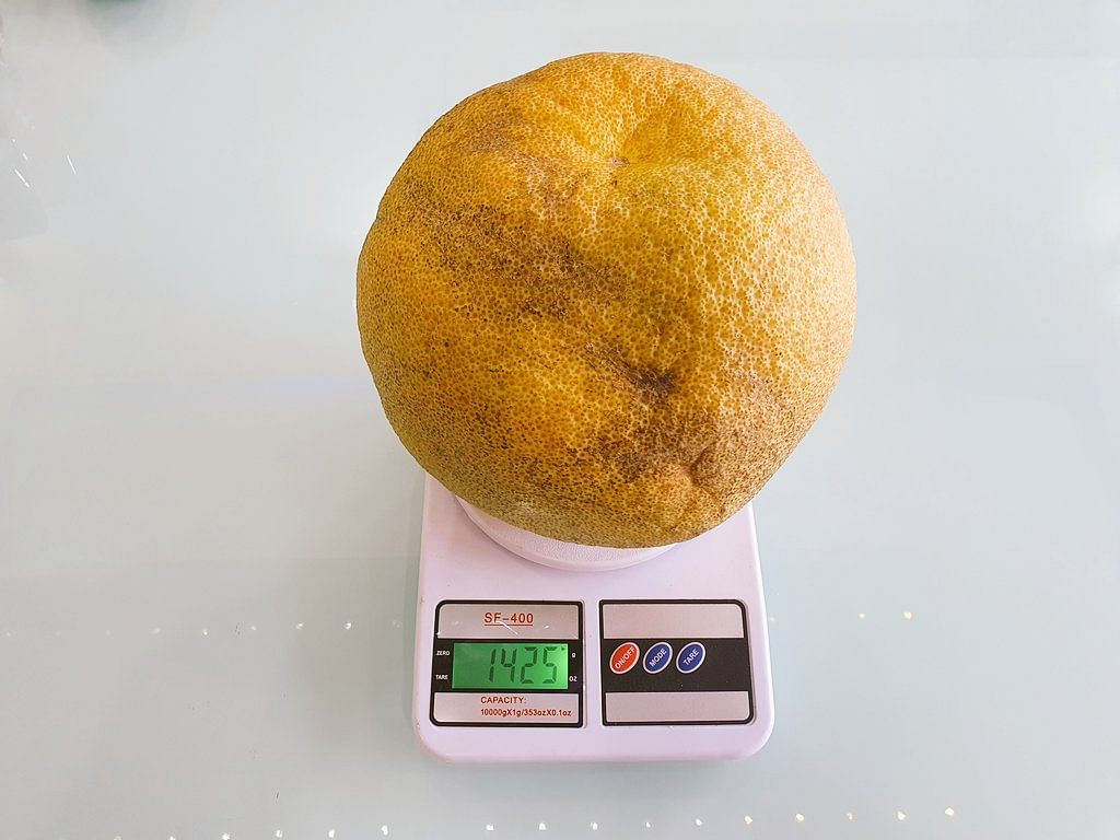 'Hulk of an orange': Twitter reacts as 'largest orange by circumference' found in Nagpur