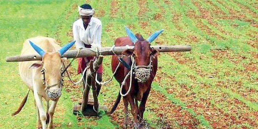 Rabi Season: Maharashtra to distribute 3.14 lakh quintal of seeds