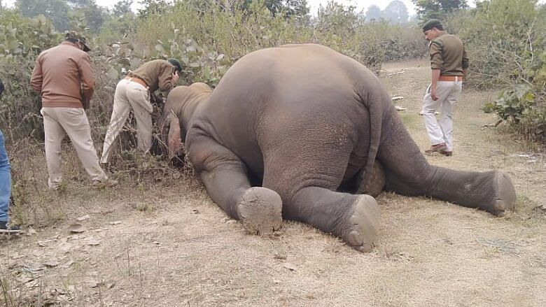 Pregnant elephant dies due to electrocution in Assam's Chirang