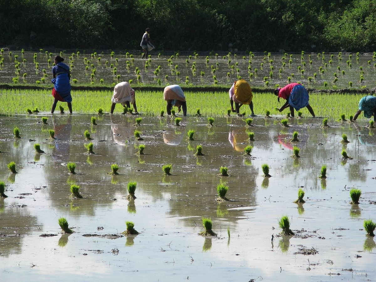 Maharashtra seeks Rs 3,721-cr aid from Centre for flood-hit farmers