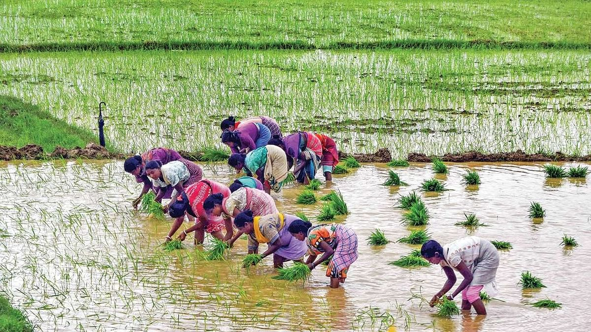 RSS doesn't see eye to eye with BJP on farmers' protest, writes Bhavdeep Kang