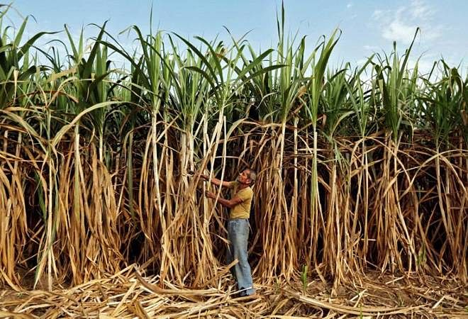 Sugarcane and ethanol is produced mainly in Uttar Pradesh, Maharashtra and Karnataka.