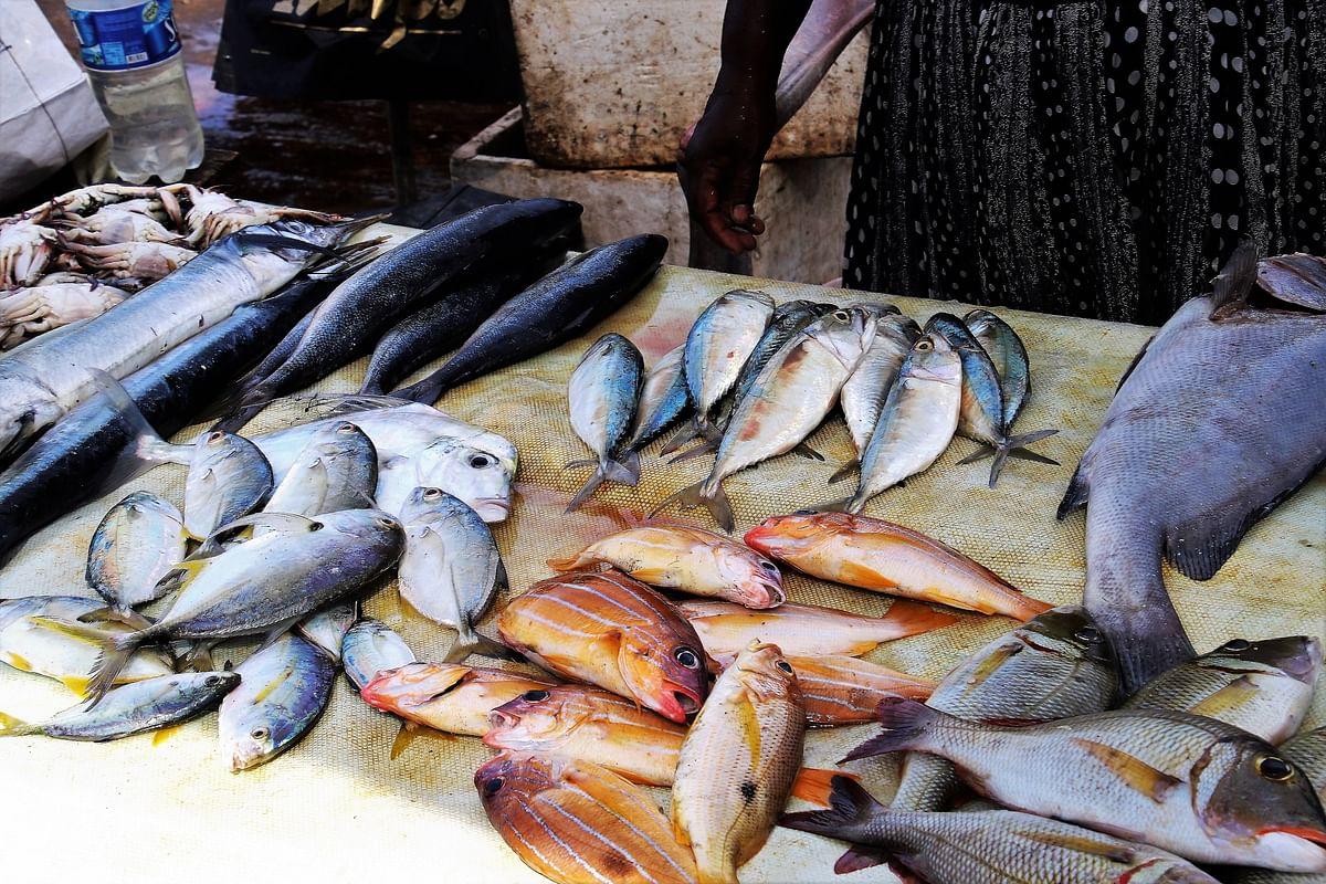 Maharashtra: Illegal fish breeding centres found in Palghar; 2 booked