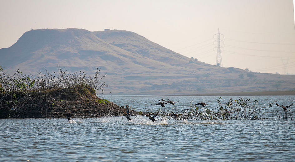 Madhya Pradesh: Nature lovers gather in biting cold to watch migratory birds in Dhar