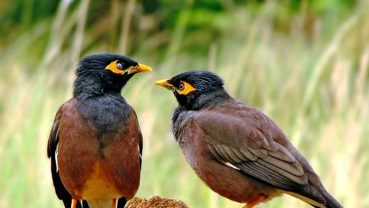 Chirping of birds at the press of a button at Uttar Pradesh's Kanpur zoo