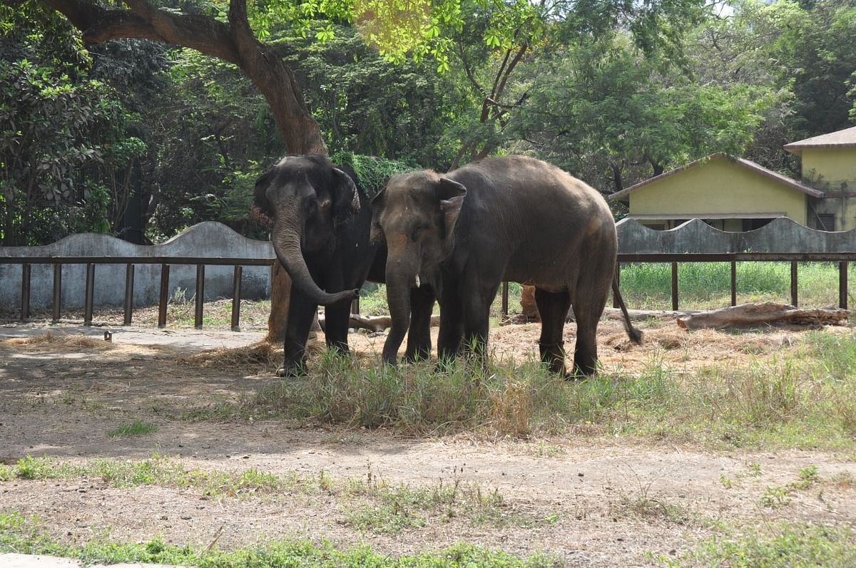 Laxmi and Anarkali (Left)