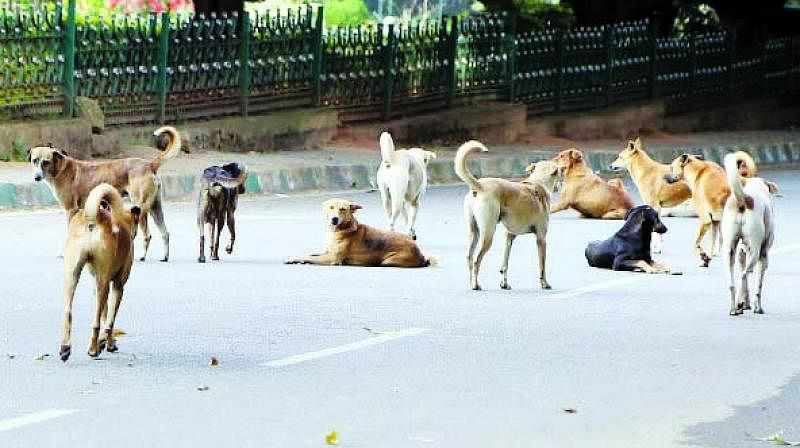 Thane Municipal Corporation sees rise in dog bite complaints