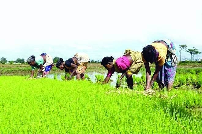 Madhya Pradesh: We'll hold chaupals in every village to make farmers aware about farm laws, says agriculture minister Patel as tillers intensify agitation
