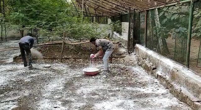 Spraying of medicines in city zoo to prevent bird flu