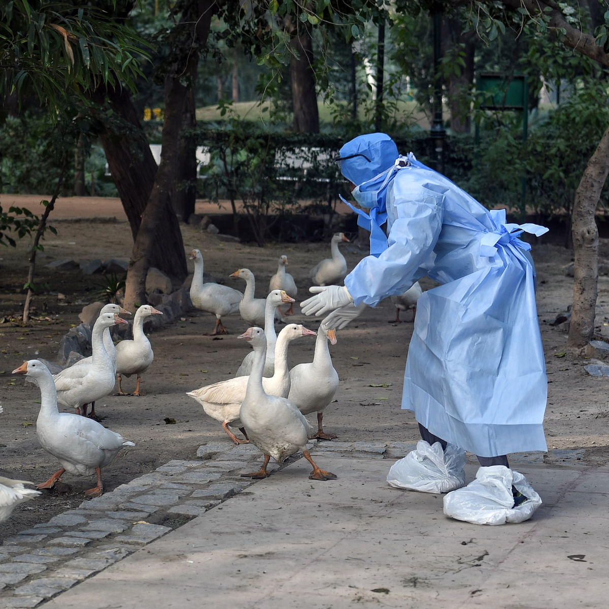 Bird flu outbreak in Maharashtra: Thane civic body sets up control room