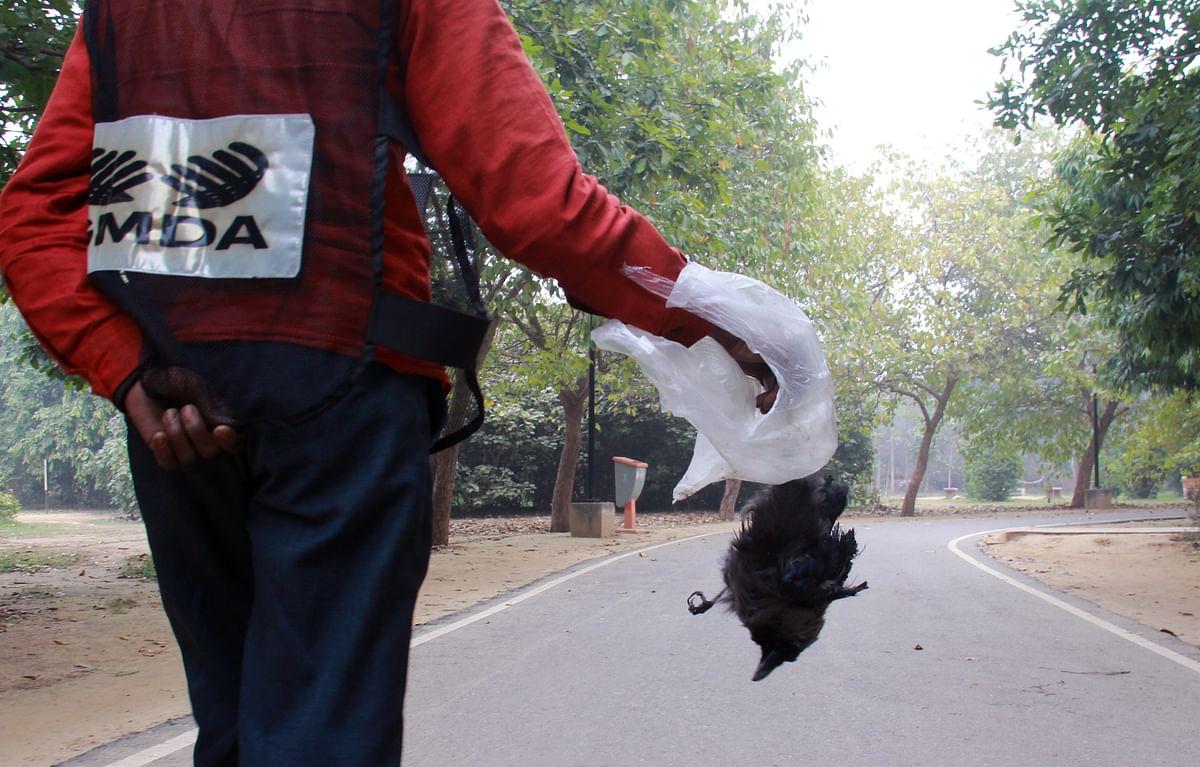 Bird Flu in Maharashtra: 307 poultry birds found dead