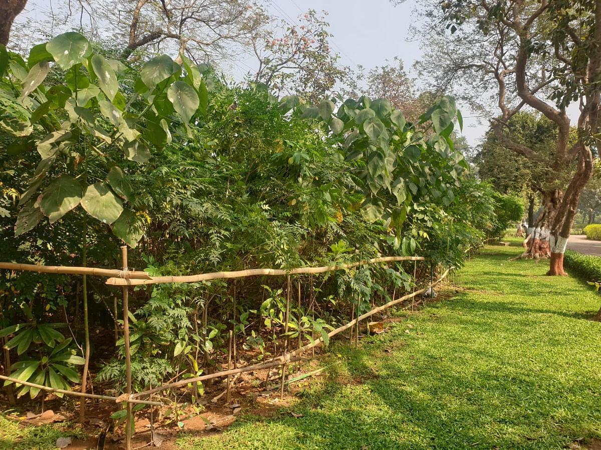 BMC plants more than 1.62 lakh trees in Miyawaki forests