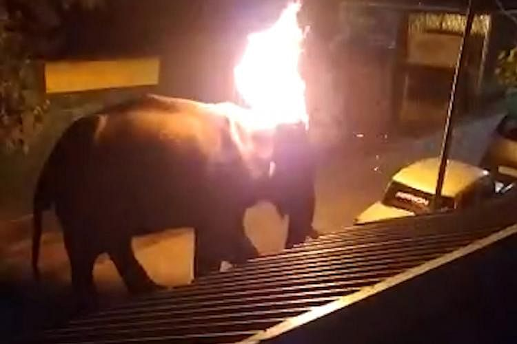 Police seal Tamil Nadu resort where an elephant was set on fire