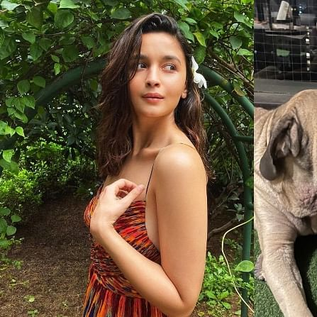 Alia Bhatt captures Ananya Pandey with Ranbir Kapoor's dog