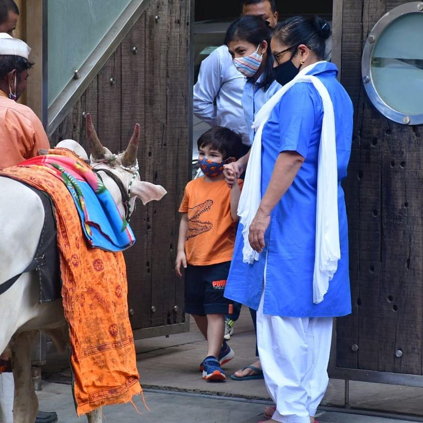Watch: Taimur Ali Khan enjoys father Saif's 'Ole Ole' song as he feeds cow outside their Bandra residence