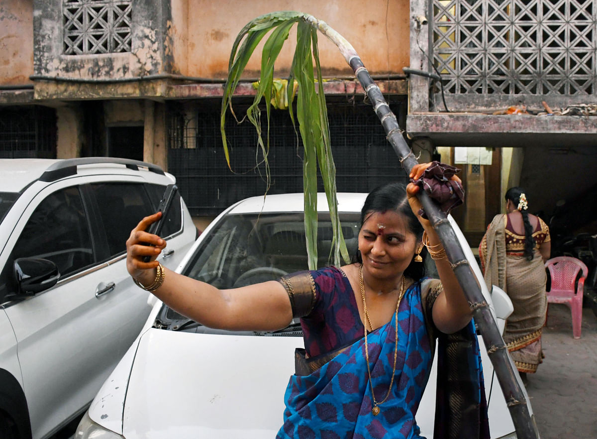 A woman clicks a selfie with the sugarcane during the Pongal celebrations at Dharavi in Mumbai on Thursday.