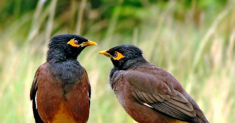 Madhya Pradesh: Owl, pigeon, cock, other birds die in Gandharvpuri, create stir in wake of bird flu