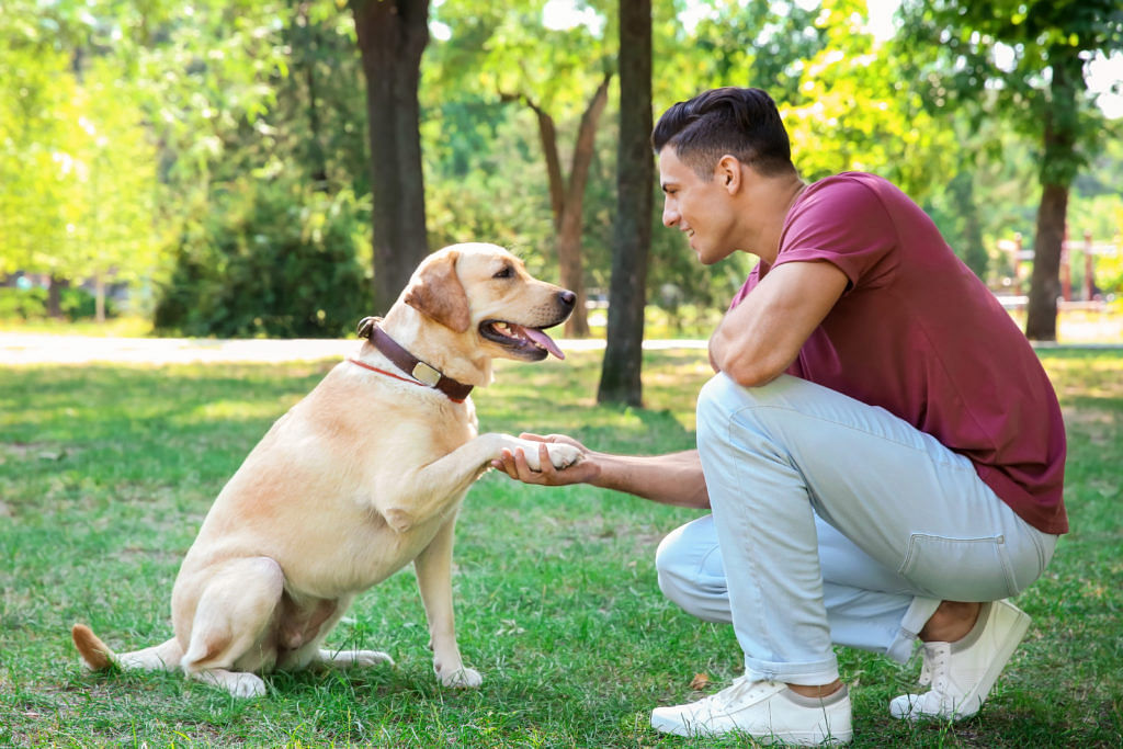 Dogs can learn new words quickly after hearing them: Finds study