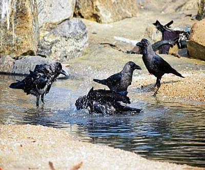 Bird flu scare grips Chembur, Deonar residents